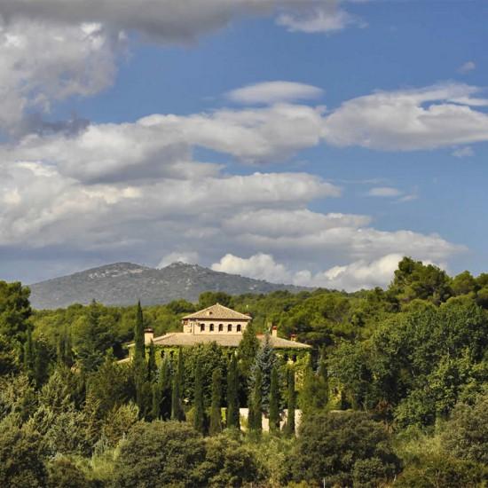 Huile d'olive Alicante