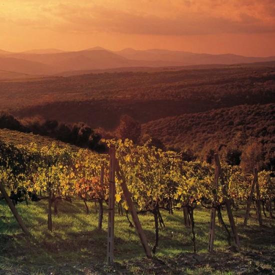 Vin de Toscane brunello