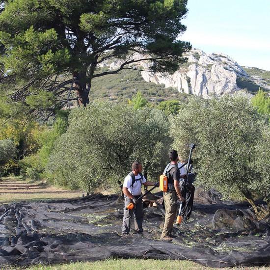 Huile d'olive Castelas Noir d'olive DOP Vallée des Baux