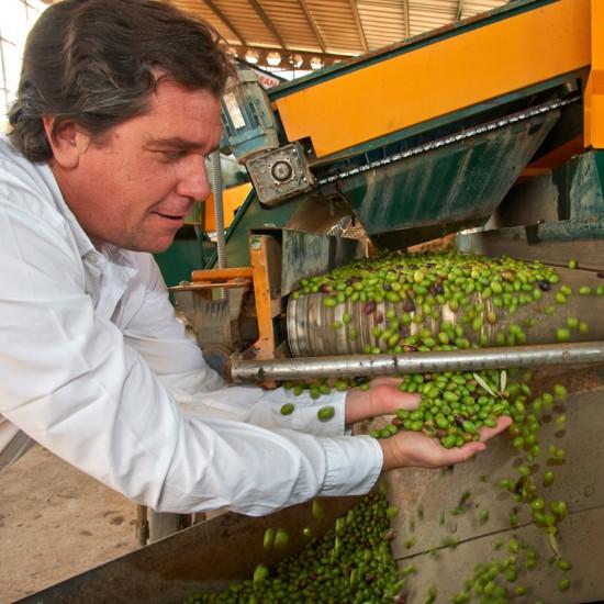 Luis Montabes producteur d'huile d'olive en Andalousie