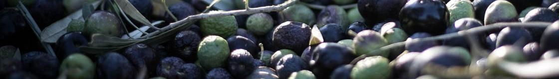 Les huiles d'olive au goût fruité noir ou fruité à l'ancienne sont des huiles d'olive aux notes rustiques d'olive noire, de tapenade et de sous-bois.